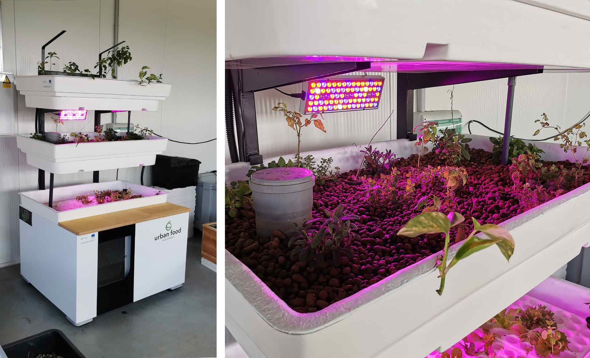Biota Urban Food baner prototype